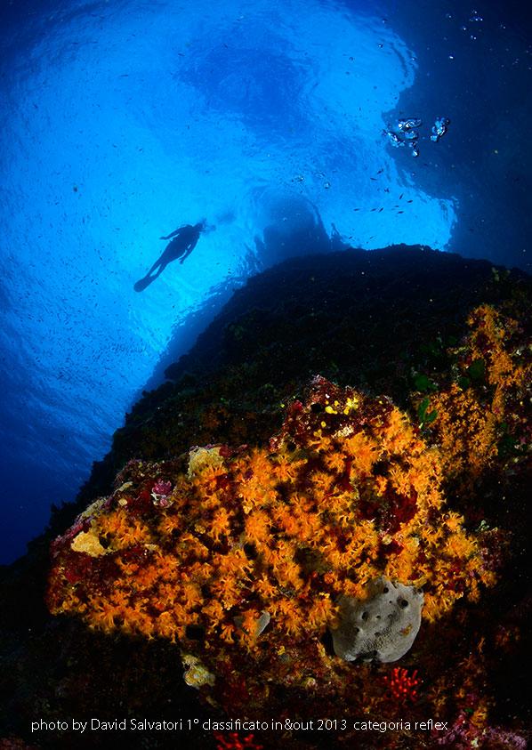 la foto ambiente della sezione subacquea di David Salvatori vincitore di in&out 2013 categoria reflex